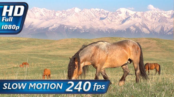 Thumbnail for Horse on a Hilly Pasture