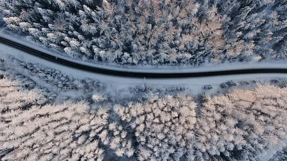 Empty Highway Across Snowy Winter Forest with Old Fir Trees