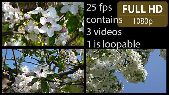 Thumbnail for Cherry Tree Flower Pack of 3 files