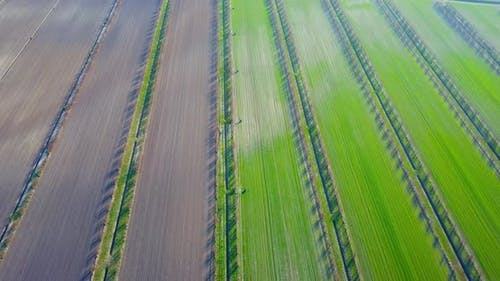 Irrigation Canals Divide Vegetable Beds and Unseeded Fields