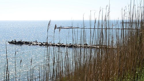 Straws On Cliff Near Sea