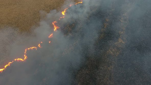 Thumbnail for Aerial Shot of Gray Smoke Flows Rising Covering Burning Dnipro Area Marshes