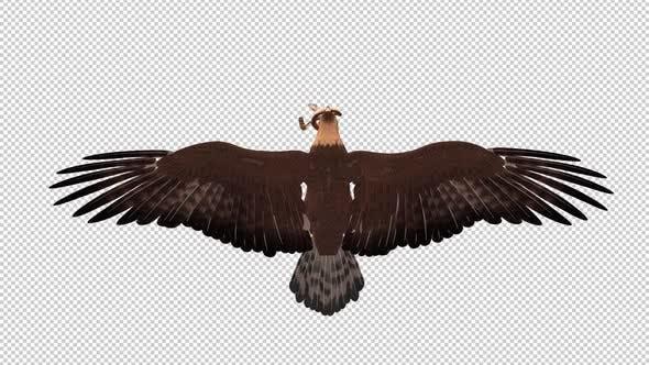 Golden Eagle W Snake Bt Loop Fhd