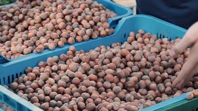 Selling hazelnuts in the market