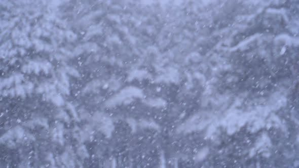 Thumbnail for Snowfall Background in Winter Pine Forest with Snowy Christmas Trees
