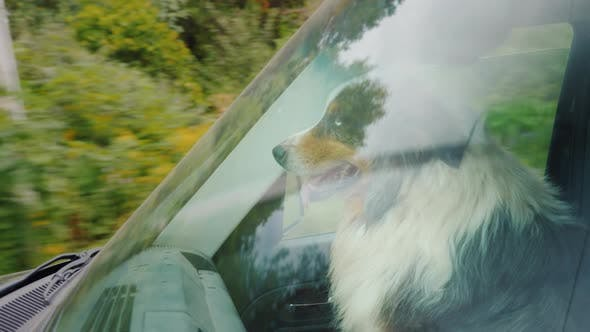 Thumbnail for Dog Rides in the Front Seat on the Passenger Seat