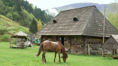 Beautiful horses in spring in the meadow eat grass, a horse near the owner's house, a brown horse