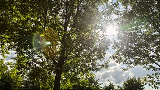 Thumbnail for Sun and Trees Timelapse