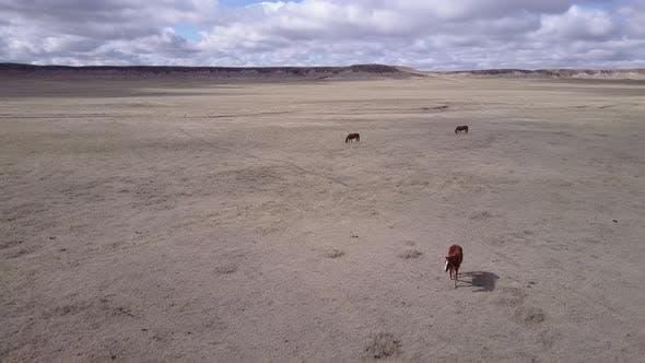 Thumbnail for LuftDrohne bewegt sich rückwärts Pferdeherde Wandern und Bewegen in Great Plains Western U.S.