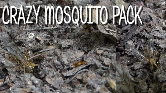 Thumbnail for Crazy Mosquito Pack