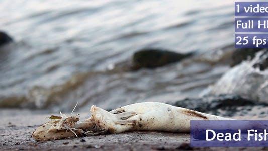 Thumbnail for Dead Fish