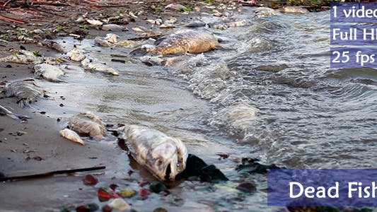 Dead Fish In Polluted Shore