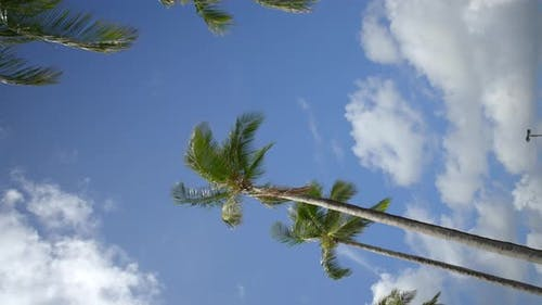 Vertical Video Palm Trees On A Blue Sky 4k 60fps