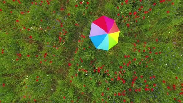 Thumbnail for View From Above of Cute Young Girl Under Colorful Umbrella Dancing in a Poppy Field Smiling Happily