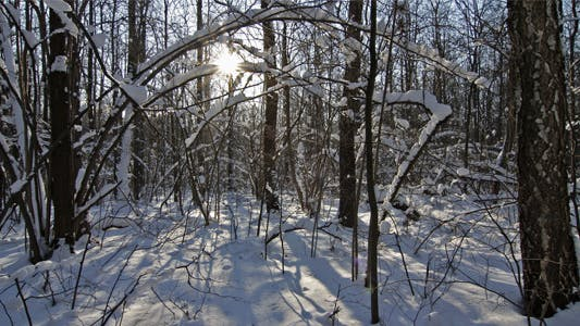 Winter Forest 02