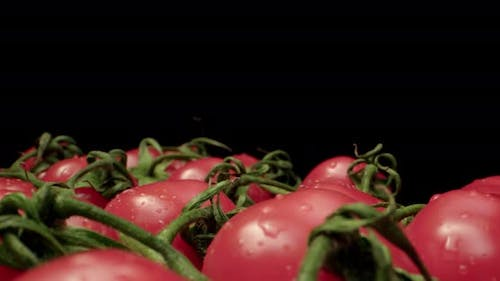 red coktail tomatoes super macro