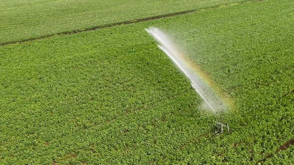 Thumbnail for Top View: Irrigation Sprinklers in the Field Aerial Shot