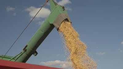 Soybean Seed