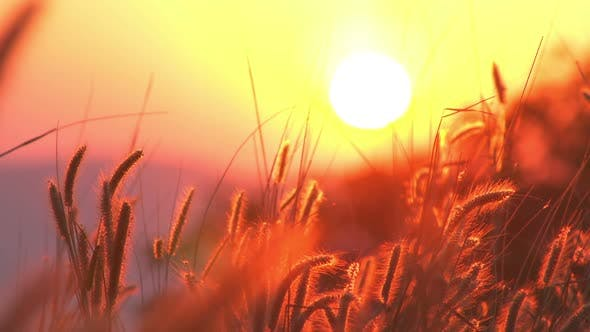 Thumbnail for Grass In Sunset