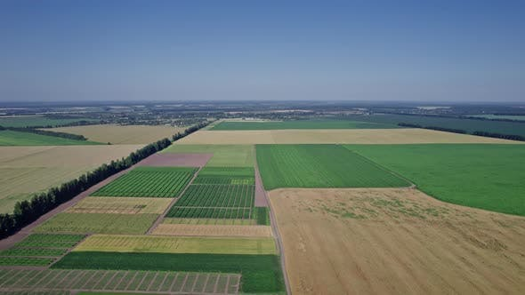 Agriculture Food Production Plantation From Up Above