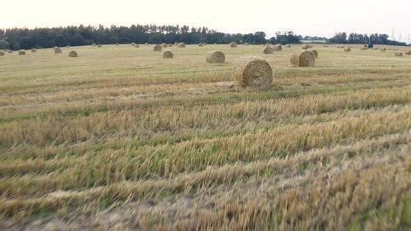 Thumbnail for Harvest