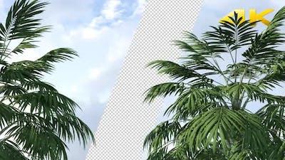 Palm Trees Loop 4K
