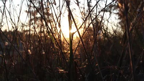 Dry Grass In The Forest At Sunset
