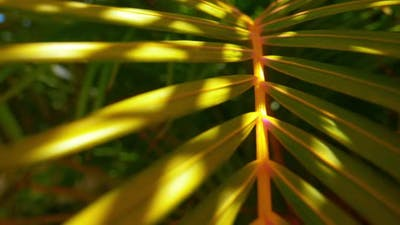 Optical Zoom Shot of a Foxtail Palm Tree and its Stem