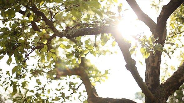 Thumbnail for Sliding Around Tree