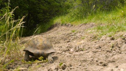 Thumbnail for Tortoise