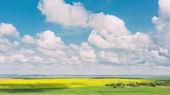 Vue Aérienne De Paysage Agricole Avec Floraison Floraison De Colza, Graines D'oléagineux Dans
