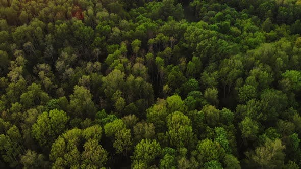 Thumbnail for Aerial Top View Forest, Texture of Forest View From Above