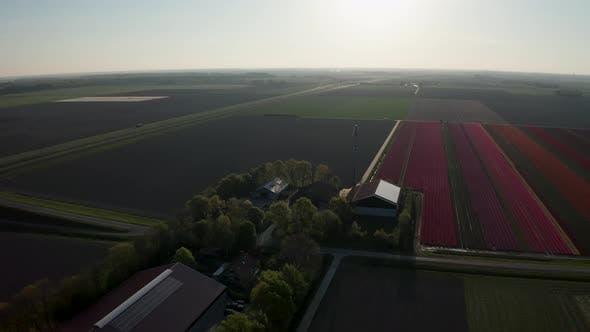 Luftaufnahme von Tulpenbepflanzten Feldern im Drontengebiet. Frühling in den Niederlanden