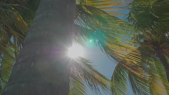 Thumbnail for Tall Palm Tree In The Caribbean Revealing Bright Sun