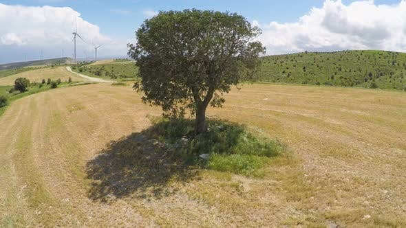 Cover Image for Untouched Sole Tree and Endless Green Landscape, Rule of Nature Law on Planet