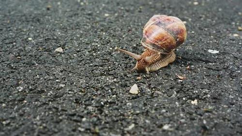 Escargot (4K)