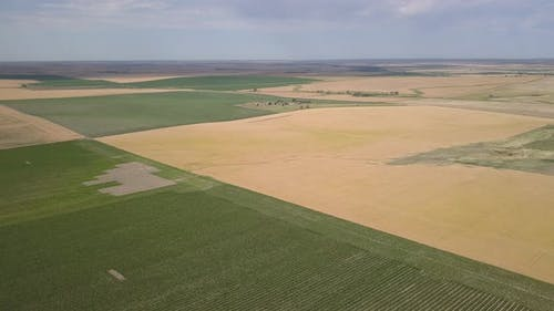 Aerial Pan of Dakota Farmland Agriculture Cropland Fields in Summer Wheat Corn