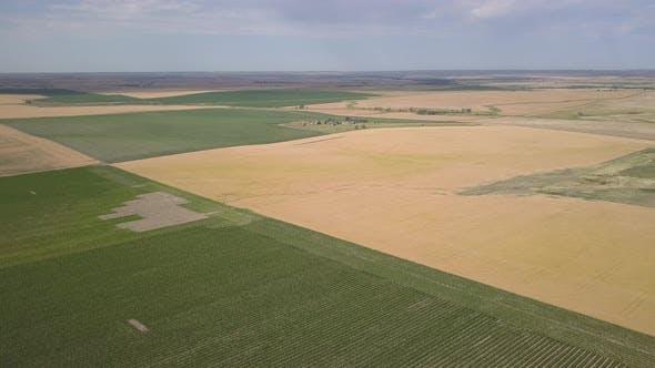 Thumbnail for Aerial Pan of Dakota Farmland Agriculture Cropland Fields in Summer Wheat Corn