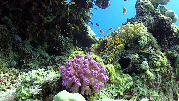 Thumbnail for Colorful Fish On Vibrant Coral Reef 12