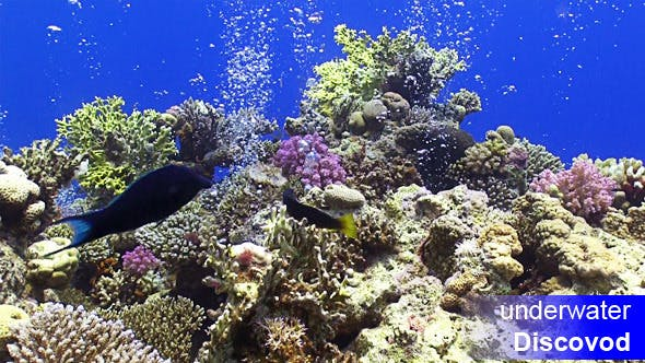 Thumbnail for Colorful Fish on Vibrant Coral Reef 15