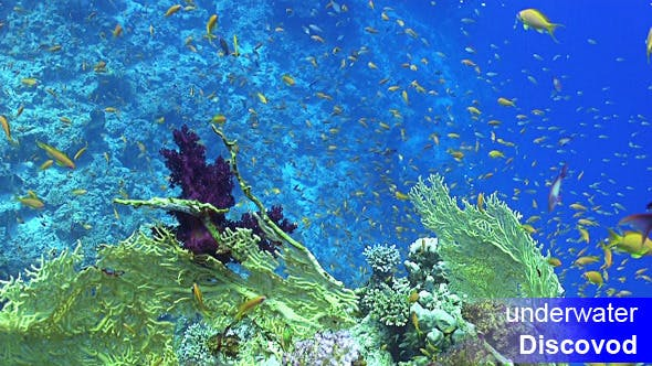 Thumbnail for Colorful Fish on Vibrant Coral Reef 16