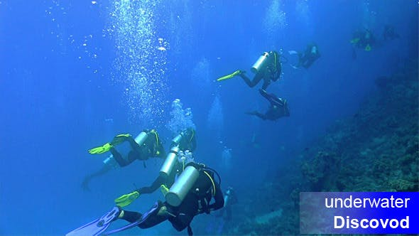Thumbnail for Group of Divers Swims Over Coral Reefs