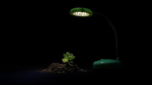 Thumbnail for Young Sprout And Table Lamp On A Black Background