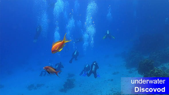 Thumbnail for Group of Divers Swims Over Coral Reefs 1