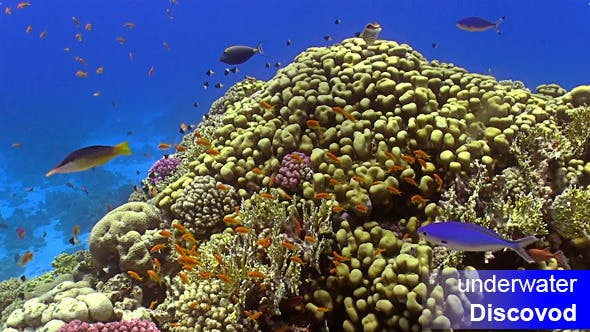 Cover Image for Colorful Fish on Vibrant Coral Reef 21