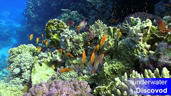 Thumbnail for Colorful Fish on Vibrant Coral Reef 28