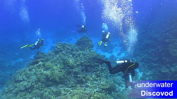 Thumbnail for Group of Divers Swims Over Coral Reefs 2