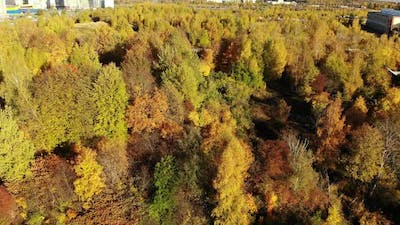 Autumn Forest on the Outskirts of the City Russia