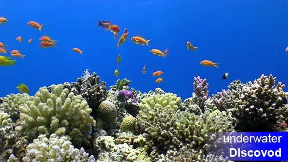 Cover Image for Colorful Fish on Vibrant Coral Reef 35