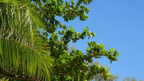 View on evergreen tropical vegetation